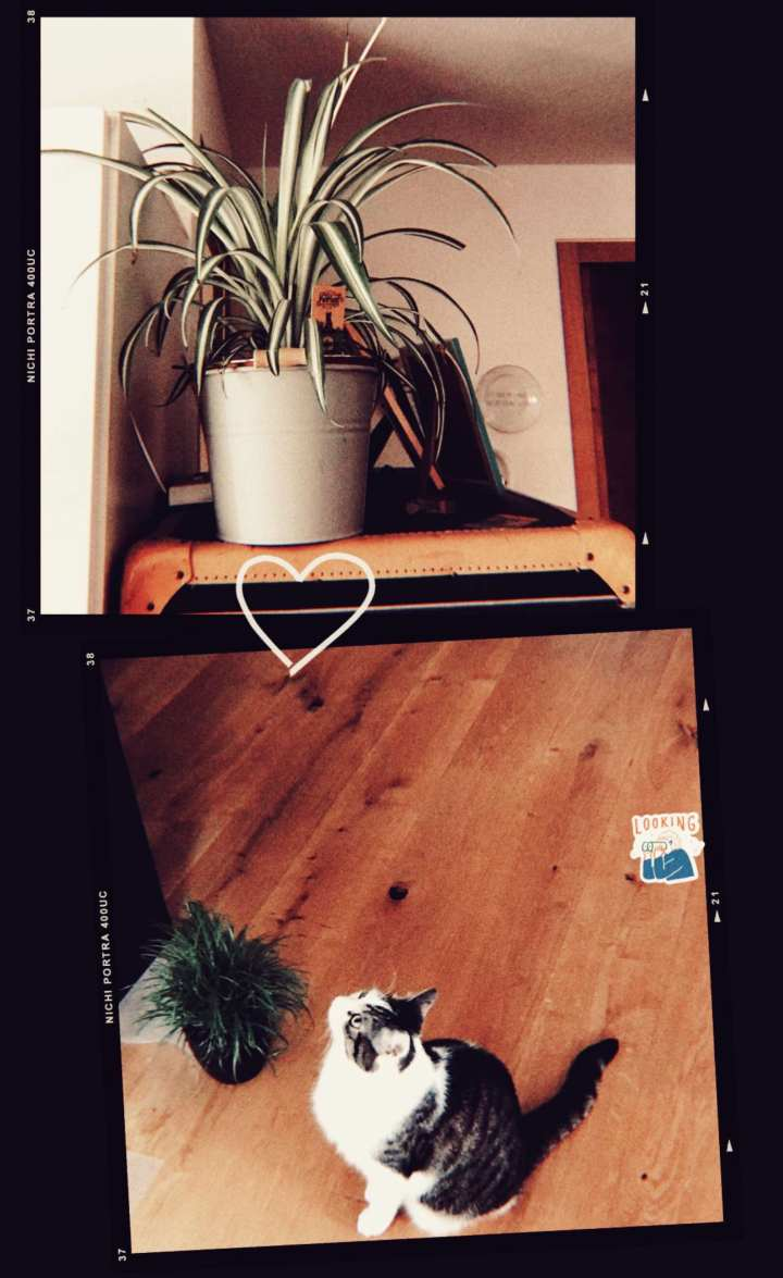 a collage of a cat staring longingly at a plant higher up