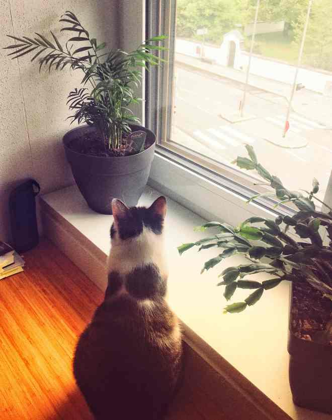 Katze sitzt von einer kleinen Bergpalme am Fensterbrett