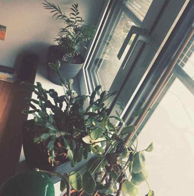 three plants on a windowsill