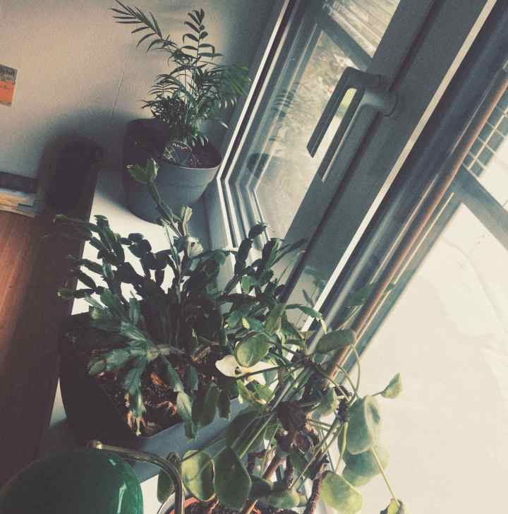 three plants on a windowsill