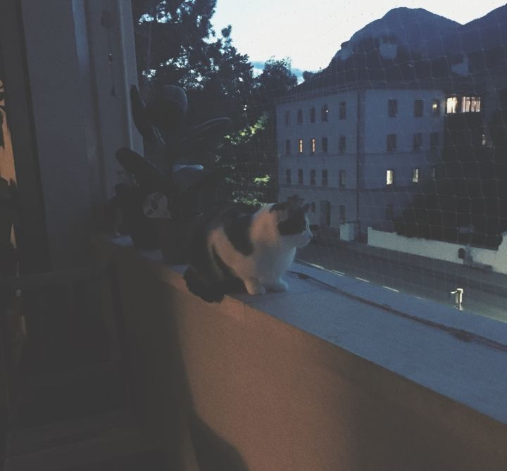 a cat on a balcony next to a street and a house in the evening