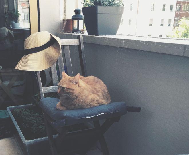 Kater auf einem Stuhl am balkon sitzend