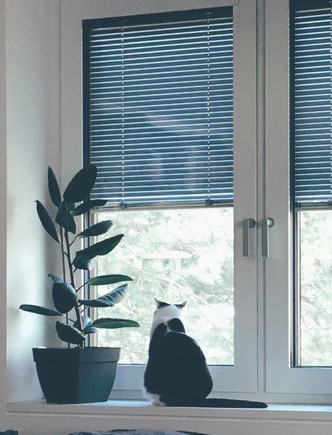 Katze sitzt am Fenster und schaut raus